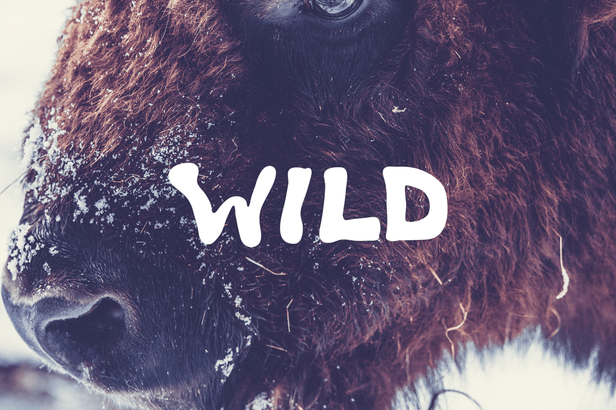 The word Wild, from Wrds.